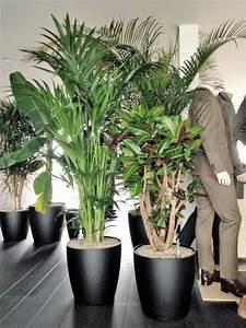 Acheter Des Plantes : acheter des plantes de bureau chez anygreen ~ Melissatoandfro.com Idées de Décoration