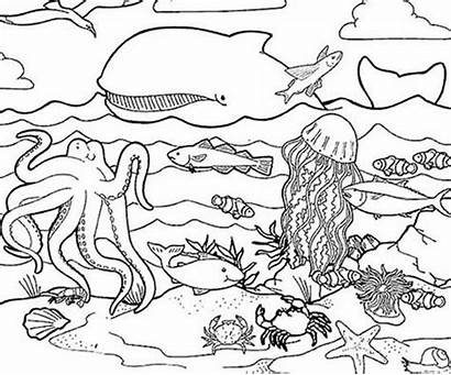 Sea Coloring Under Pages
