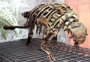 Ankylosauridae Wikipedia