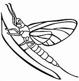 Mayfly Coloring Pages Tattoos Silverfish Animals Colorful Template sketch template