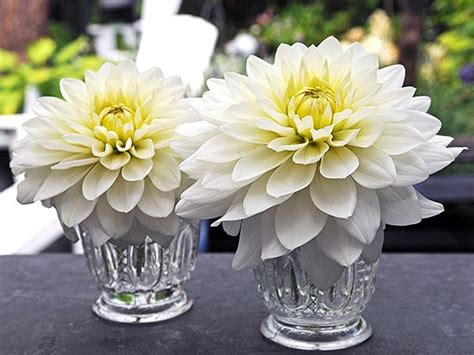 Classic Floral Trio Lilies Dahlias And Glads by Classic Floral Trio Lilies Dahlias And Glads