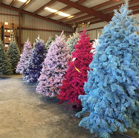 do real christmas trees have bugs this year colored trees could make your home bright realtor 174