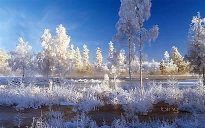 Bing Wallpapers December Weekly Snow Trees