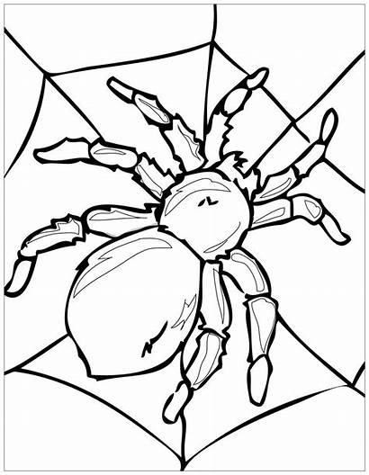 Spider Coloring Insects Its Spiderweb Pages Adult