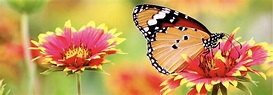 Care for our Common Home: Season of Creation 2019 - Faith ...