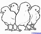 Coloring Pages Chick Chicks Baby Chicken Printable Drawing Draw Hen Template Step Colouring Outline Animals Chickens Adult Birds Cute Popular sketch template