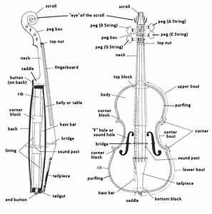 The Parts Of A Violin  Violin Diagram