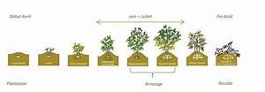 Période Pour Planter Les Pommes De Terre : comment me cultiver la pomme de terre laurette ~ Melissatoandfro.com Idées de Décoration