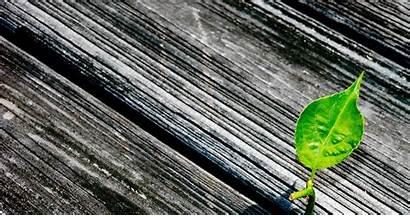 Texture Simple Wood Wallpapers Leaf Desktop Textured
