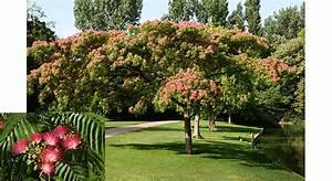 Arbre à Croissance Rapide Pour Ombre : quel arbre choisir pour s 39 offrir un coin d 39 ombre au jardin ~ Premium-room.com Idées de Décoration