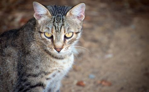 Getting Rid Of 25m Feral Cats By 2025  Rnz News