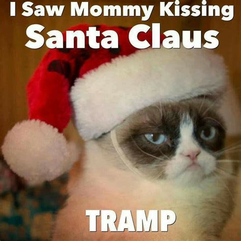 Christmas Cat Meme - 343 best images about grumpy cat on pinterest grumpy cat quotes jokes and cats