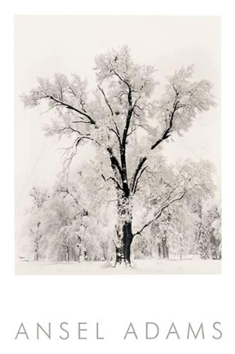 oak tree snowstorm  ansel adams