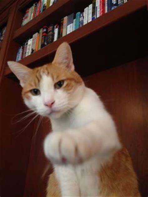 Weekly Pet Pic: A Feline Fist Bump - ManagedMoms.com