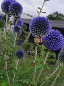 Welche Blumen Für Bienen : pflanzen die schnecken vertreiben pflanzen die schnecken nicht fressen tinto bloggt ameisen ~ Eleganceandgraceweddings.com Haus und Dekorationen
