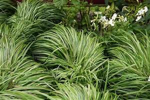 Gräser Winterhart Immergrün : bl hpflanzen gr ser und gr npflanzen als bodendecker ~ Michelbontemps.com Haus und Dekorationen