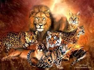 Blog FUAD - Informasi Dikongsi Bersama: The 7 Big Cat Species