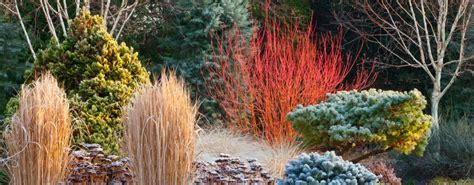 giardino invernale come realizzare il giardino d inverno