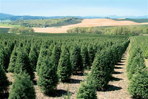 oregon s nursery and christmas tree industry grows farm flavor