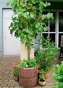 Winterharte Kübelpflanzen Schattig : topfpflanzen f r fassaden auswahl kultur und winterschutz ~ Michelbontemps.com Haus und Dekorationen