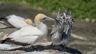 Sea Birds at and around Wallaroo South Australia