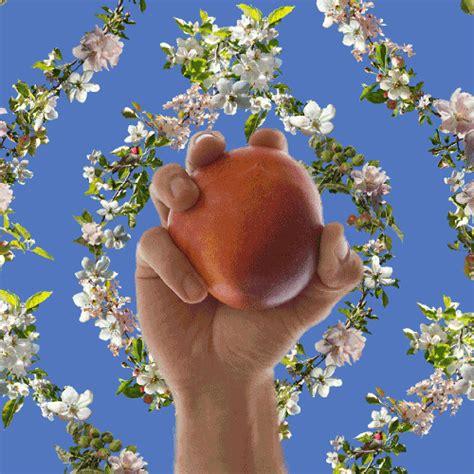 Animated Fruit Wallpaper - fallen fruit wallpaper 187 fallen fruit