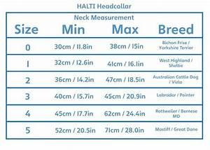Halti Headcollar - Size 4 Reduce Pulling East Road