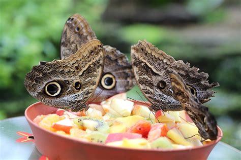 """Sonderausstellung """"tropische Schmetterlinge"""" Botanischer"""