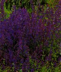 Kuebelpflanzen Winterhart Bluehend : pflanzenset staudenbeet bienen 3 4 m pflanzen versand ~ Whattoseeinmadrid.com Haus und Dekorationen
