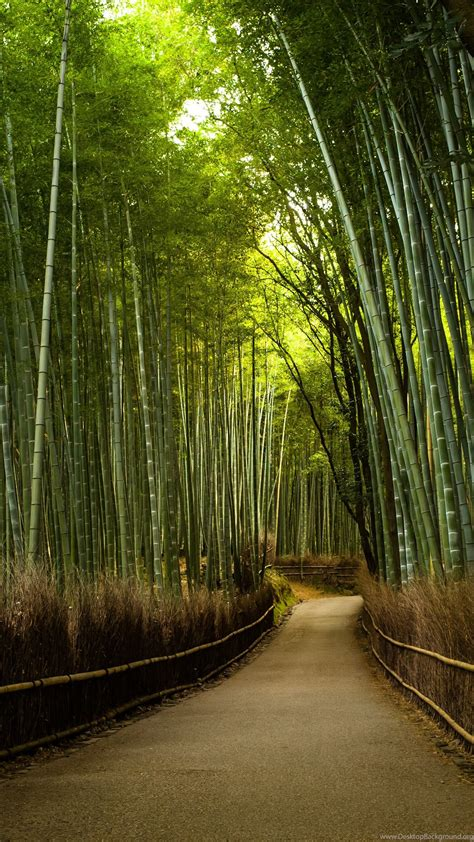 bamboo forest road desktop background