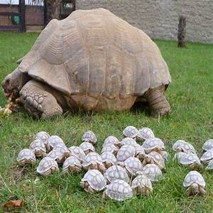 Adorable baby tortoises pic goes viral : Turtle vs ...