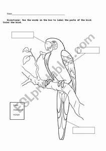 35 Bird Diagram To Label