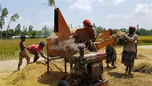 Amazing Paddy Thresher Machine In Village