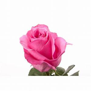 How Long Do Single Stem Roses Last - Best Flowers and Rose ...