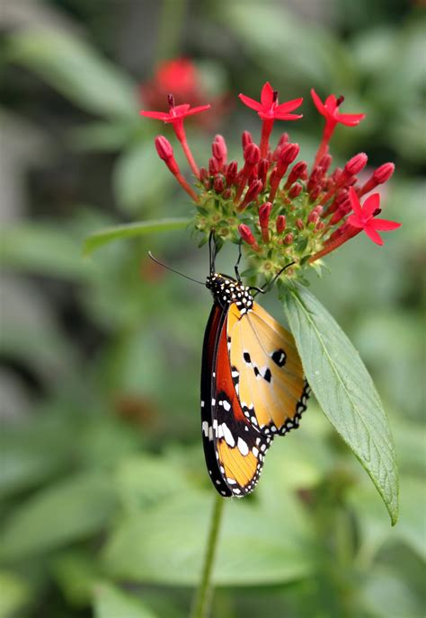 Wildlife and Landscapes: Exotic Butterflies