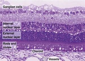 230 Best Images About Histology On Pinterest