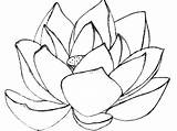 Lotus Coloring Flower Mandala Magnolia Drawing Printable Flowers Getcolorings Getdrawings Stunning Clipart Adults sketch template