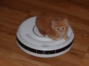 cat on roomba update on the help ari buy kitty a roomba perfume