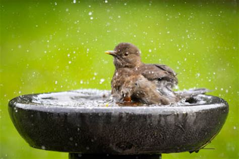 bird baths and drinking water