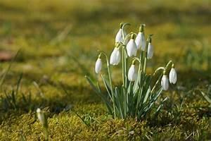 Gartenarbeit Im Februar : gartenarbeit im februar tipps f r gem se und b ume garteln ~ Lizthompson.info Haus und Dekorationen