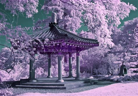 chinese garden  nature background wallpapers
