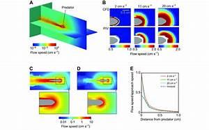 The Bow Wave Of A Predator  A Computational Fluid Dynamics  Cfd  Model