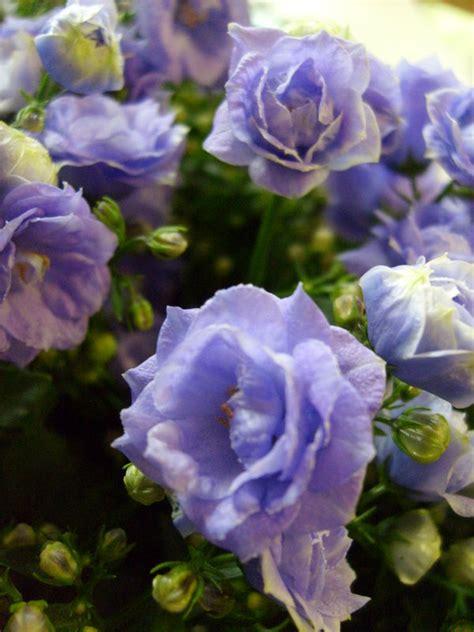 cuisine des fleurs canules photo de fleurs des fleurs a la cuisine