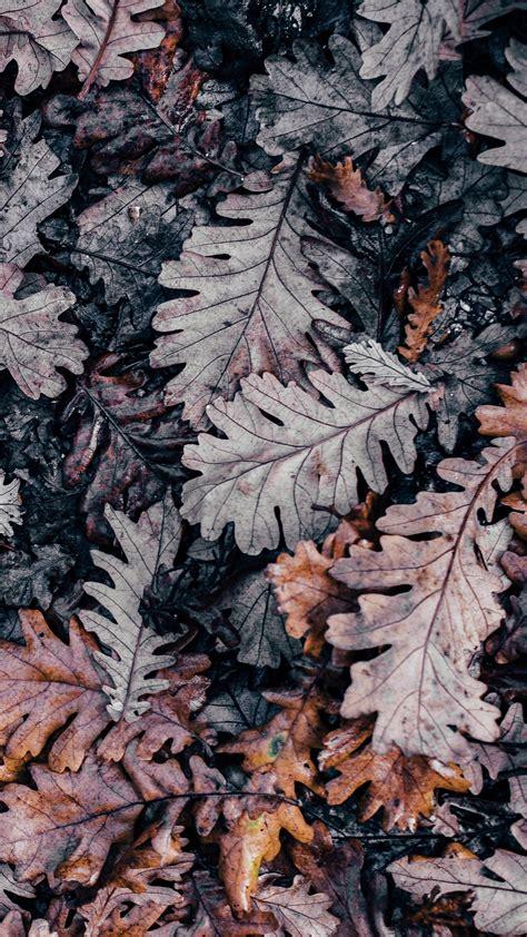 Aesthetic Fall Wallpaper Iphone Xr by Pin By Ounce On Jpg Flowery Wallpaper Wallpaper