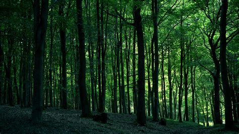 Background Images Of Trees by 2560x1440 Green Forest Desktop Pc And Mac Wallpaper