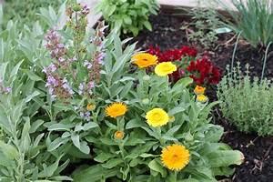 Mischkultur Im Garten : salbei anpflanzen und pflegen im garten oder im topf ~ Orissabook.com Haus und Dekorationen