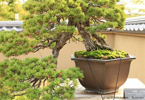Bonsai Baum Pflanzen by Bonsai Baum Schneiden Garten Bonsai Baum Pflanzen Pflegen