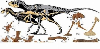 Lythronax Teratophoneus Dinosaur Evolution Tyrannosaur Argestes Cretaceous