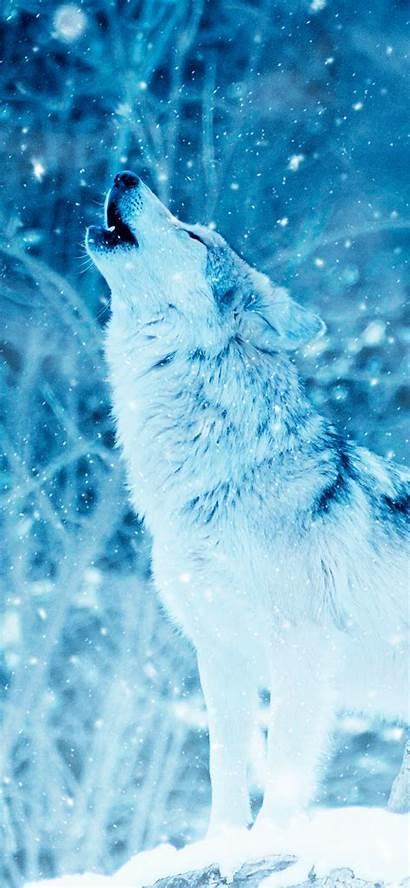 Wolf Iphone Snow Pro Max Plus Ios