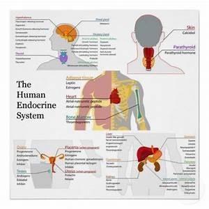 62 Best Images About Nursing  Endocrine System  On